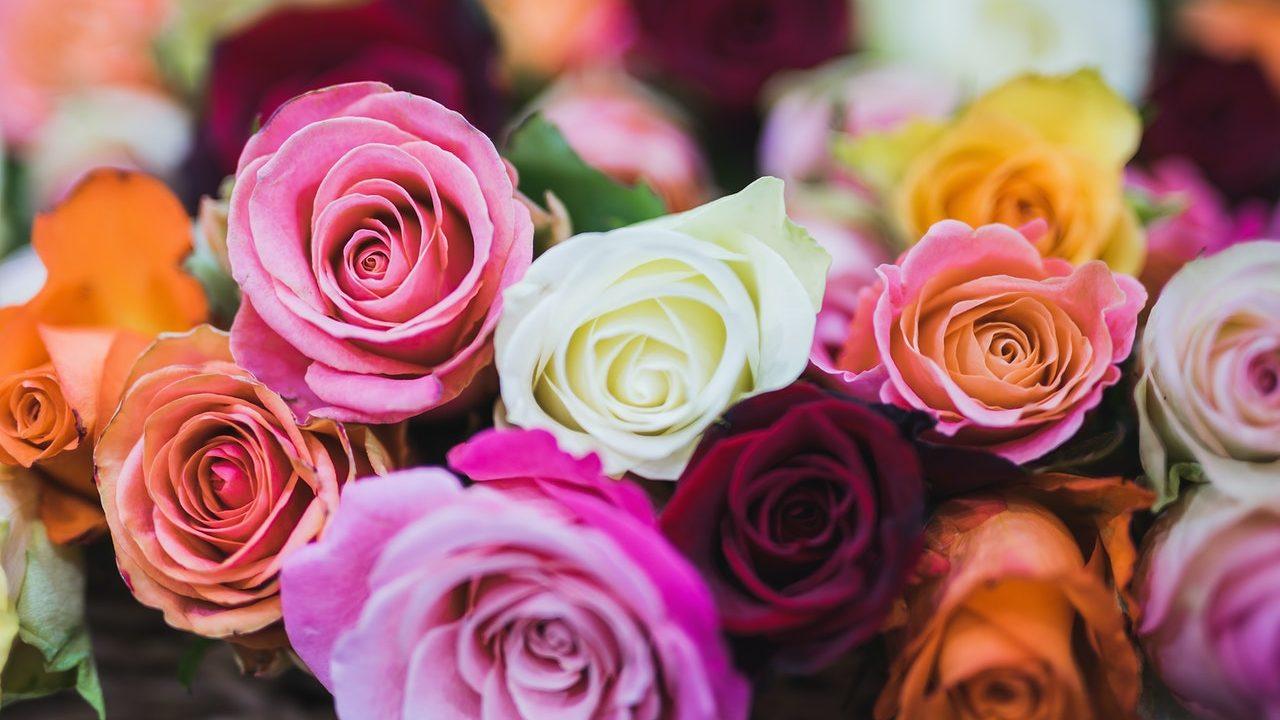 mascarillas de flores rosas lavanda