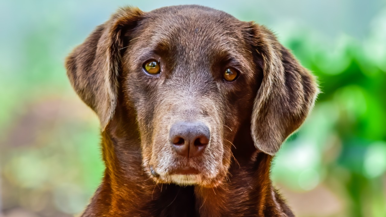 alimentos para perros mayores de 10 años