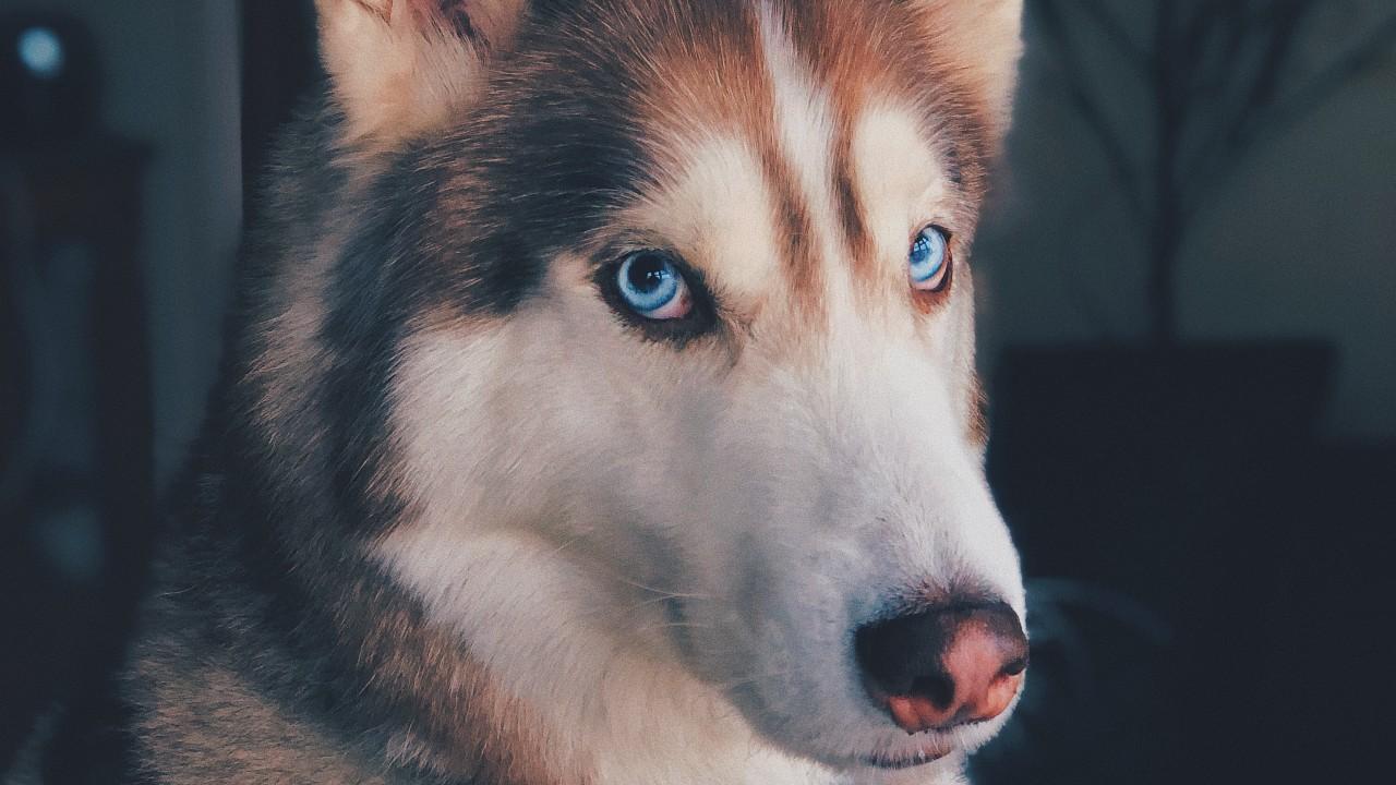 Sonidos que alteran a los perros