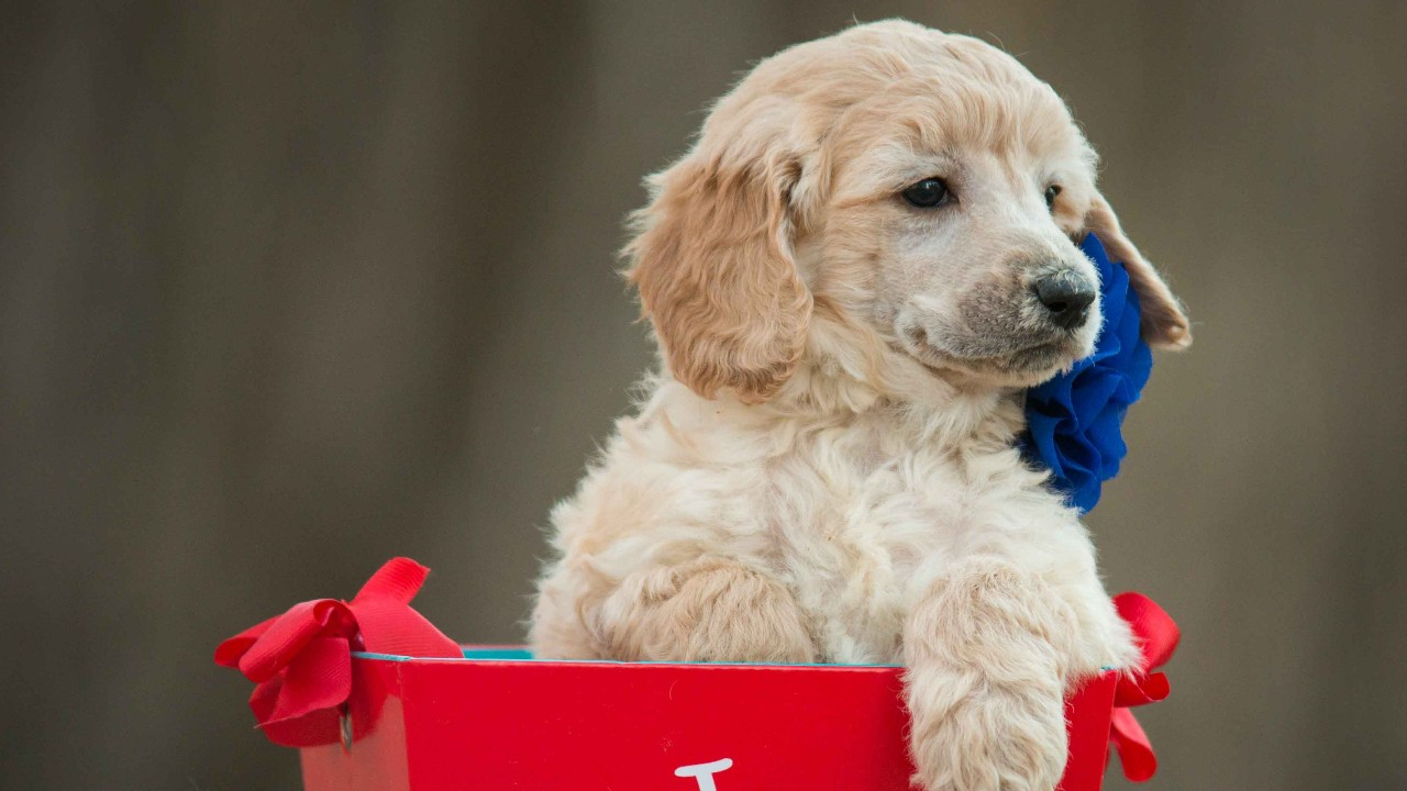 razones para no regalar un perro a los niños