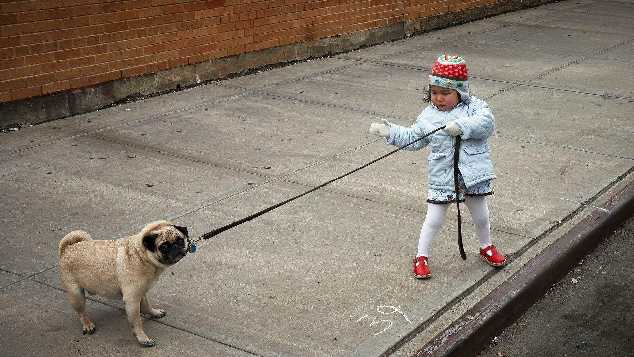 por que no es bueno regalar un perro