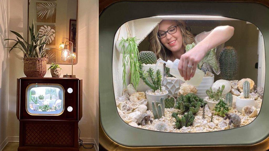 convirtio su televisión en terrario terrarium tarrah schiller