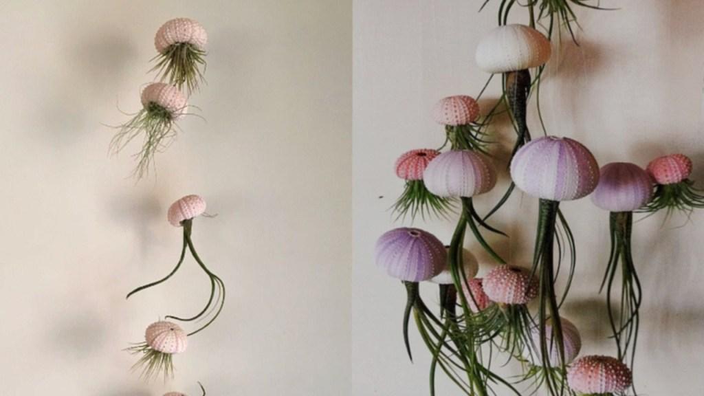 plantas de aire medusa decoración interiores plantas