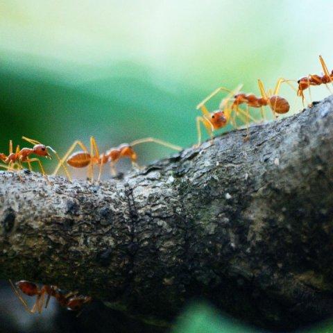 hormigas en la casa significado espiritual
