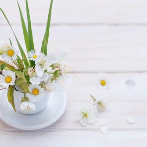 manzanilla en taza para cultivarla en casa o departamento