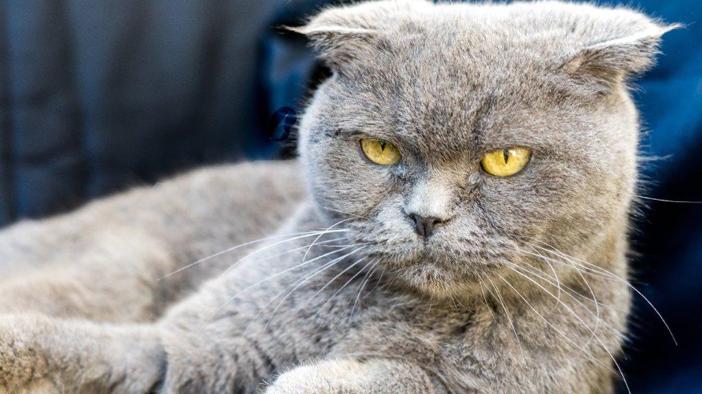 cosas que a los gatos no les gustan de las personas