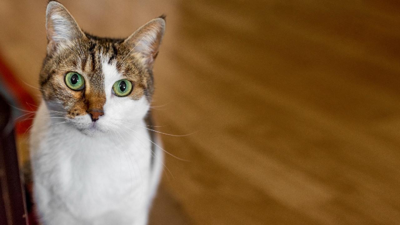 cosas que gatos odian de los humanos