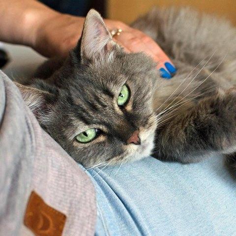 cómo acariciar a un gato forma correcta según científicos