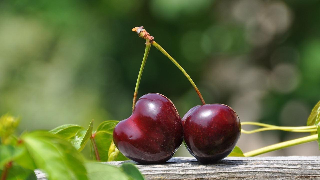 como cultivar cerezas en maceta recomendaciones