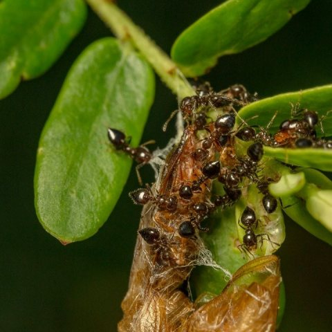como quitar hormigas de las plantas tips eficaces