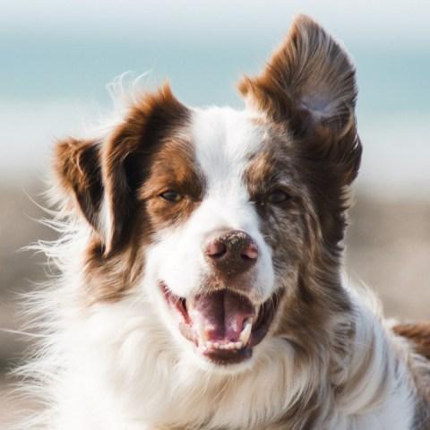 nombres para perros macho significado