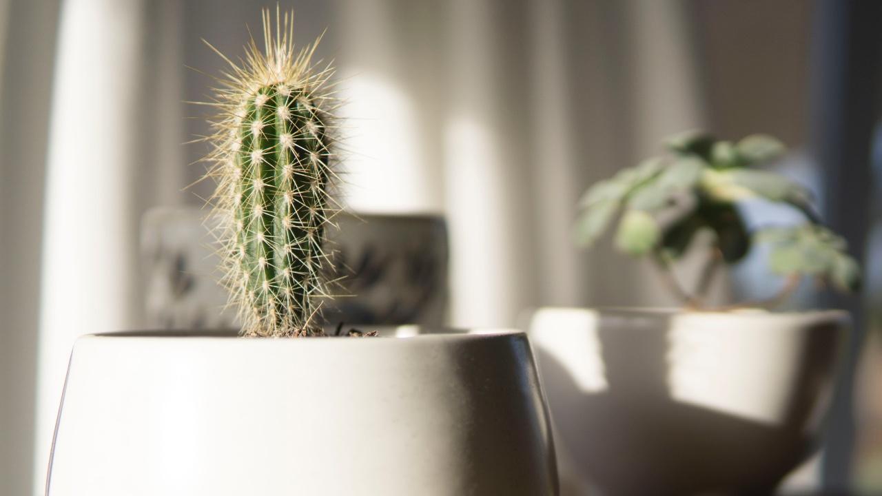 plantas negativas para el hogar
