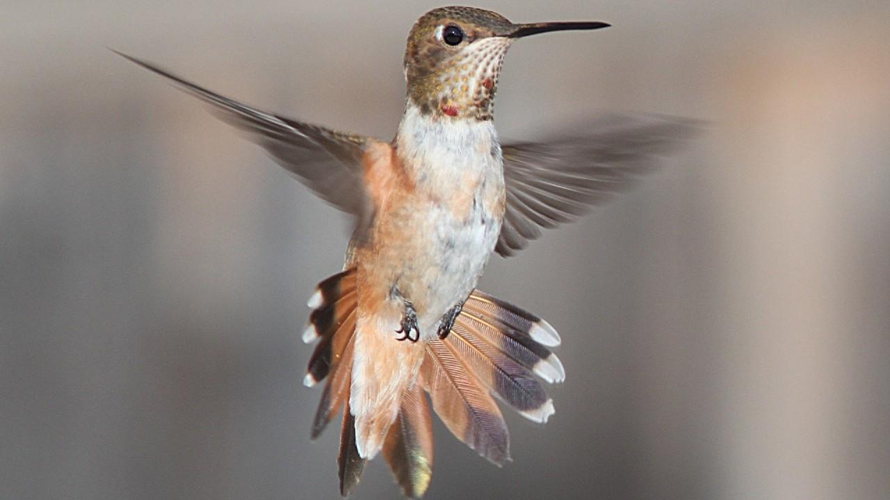 bebedero para colibri hecho con botella