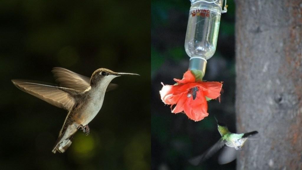 como hacer bebedero para colibries
