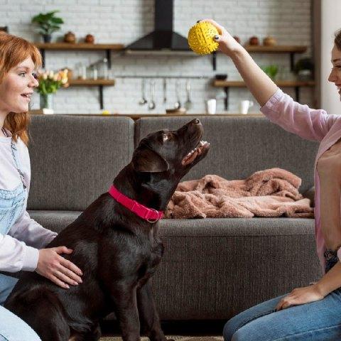 juguetes que hacen ruido los mejores para los perros