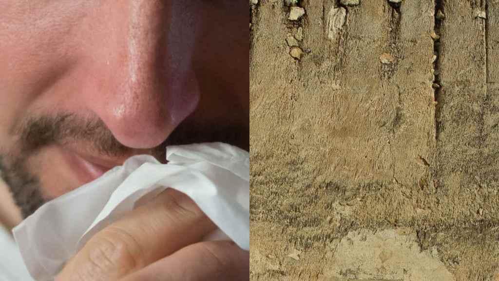 humedad en paredes puede provocar enfermedades peligros