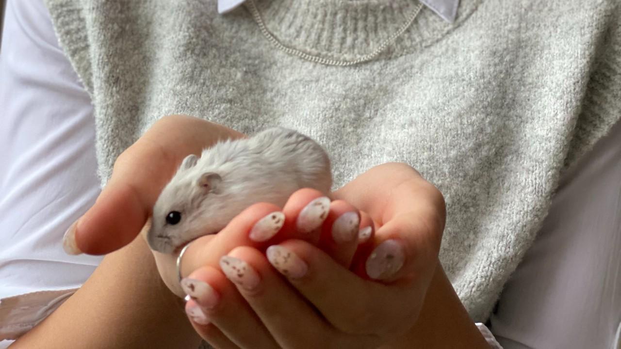 hamster como mascota para niños