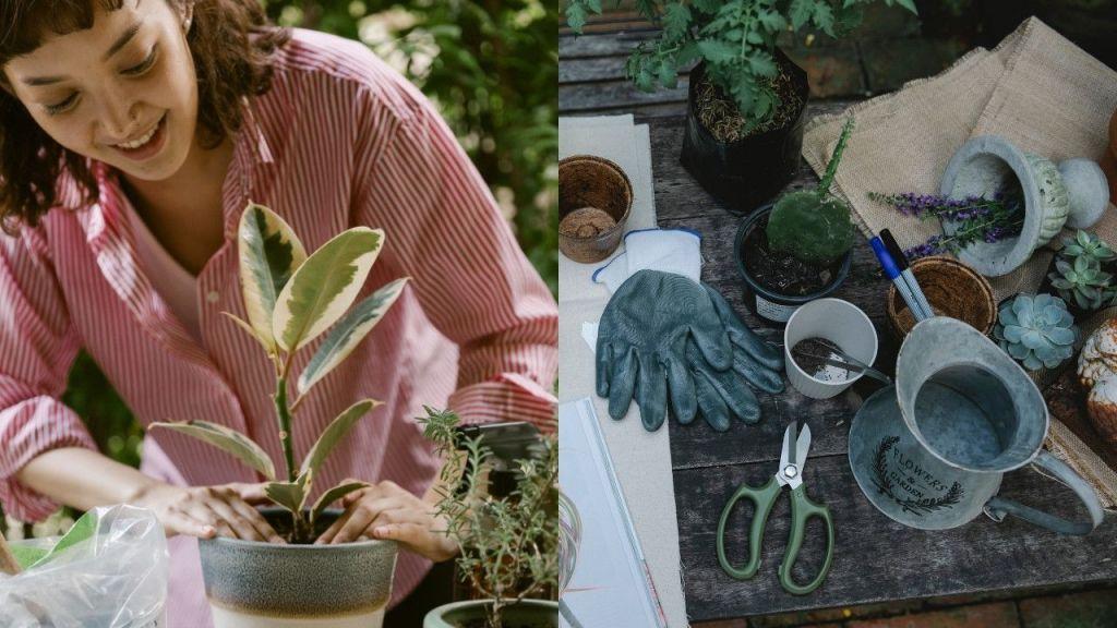consejos de jardineria para principiantes