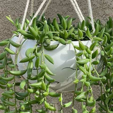 qué plantas suculentas puedes poner en tu hogar