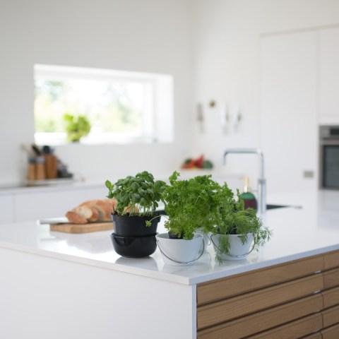 plantas en la cocina cuales debo tener
