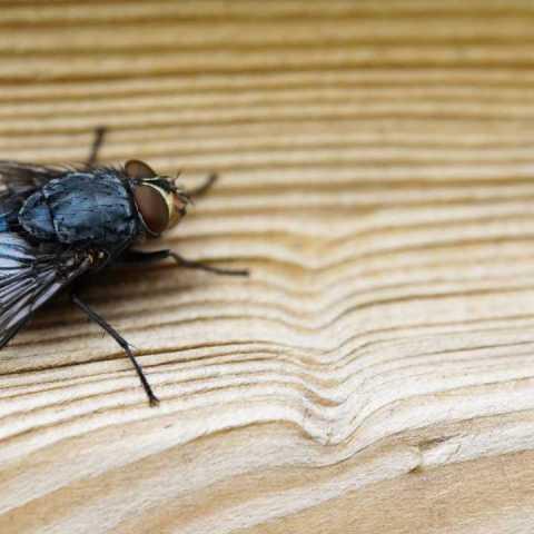 remedios caseros mexicanos para ahuyentar a las moscas de la casa