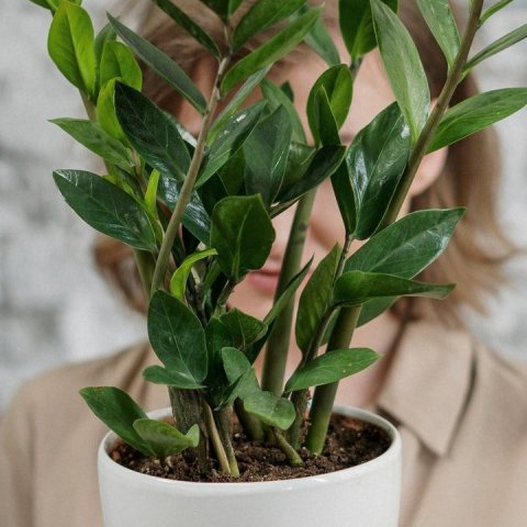 Tips para identificar las plantas enfermas