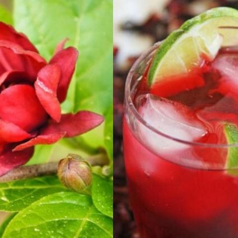 Cómo cultivar flor de jamaica en maceta