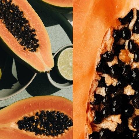Cómo cultivar papaya en maceta, fácil y rápido