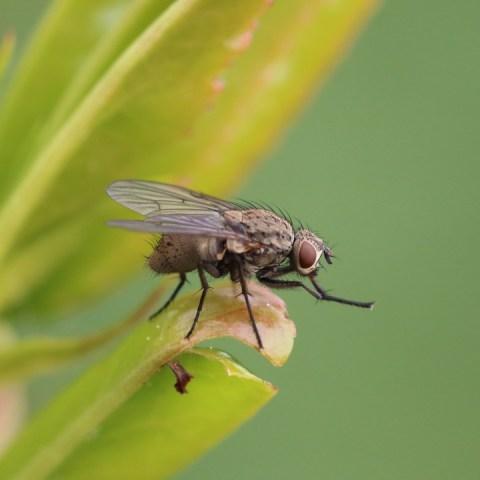 qué quiere decir que tengas muchas moscas en casa