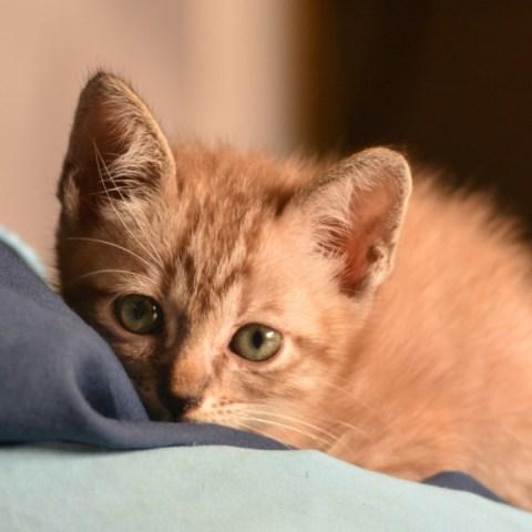 es malo limpiar a gato recien nacido con toallitas humedas