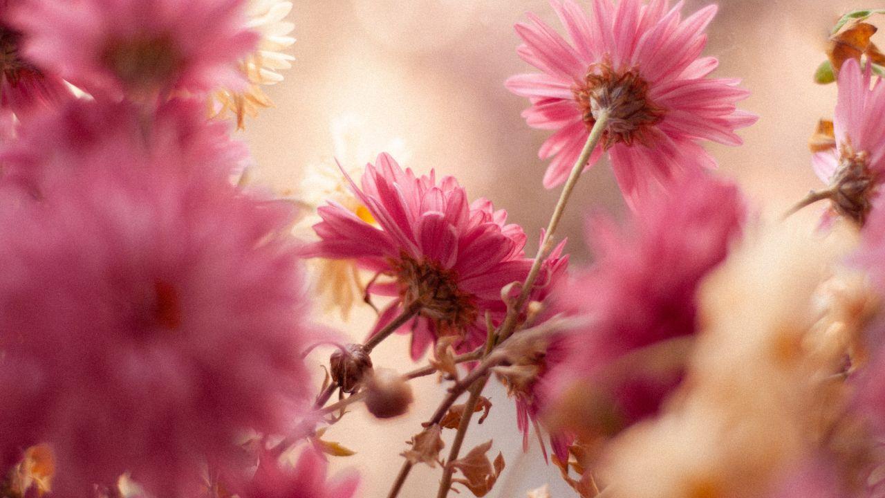 Haz florecer tus plantas con avena