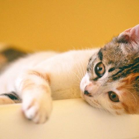 nombres de gatos que significan amor