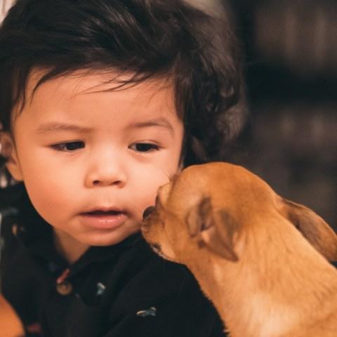 que hacer si tus hijos se comen croquetas para perro