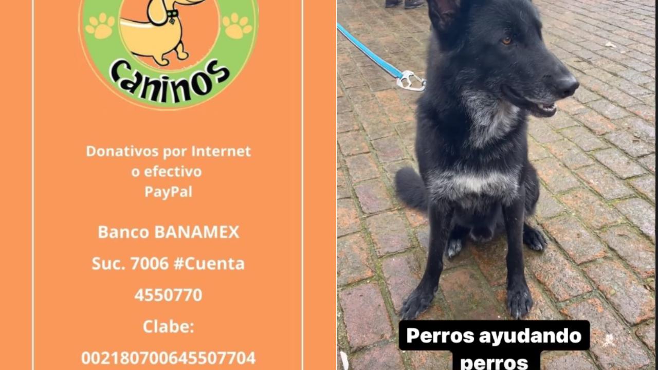 Apoya a los perritos del refugio 'Milagros Caninos'