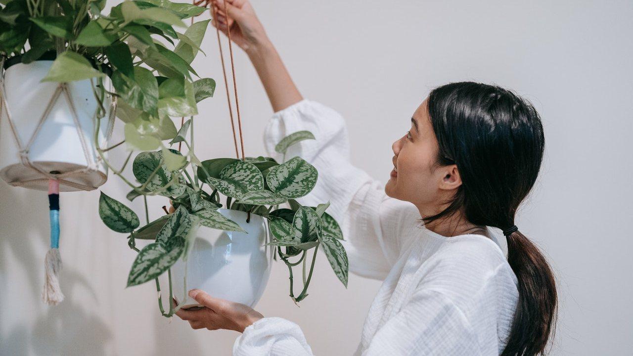 revivir una planta con exceso de agua