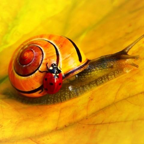 Plagas y enfermedades de las plantas mas comunes en otoño
