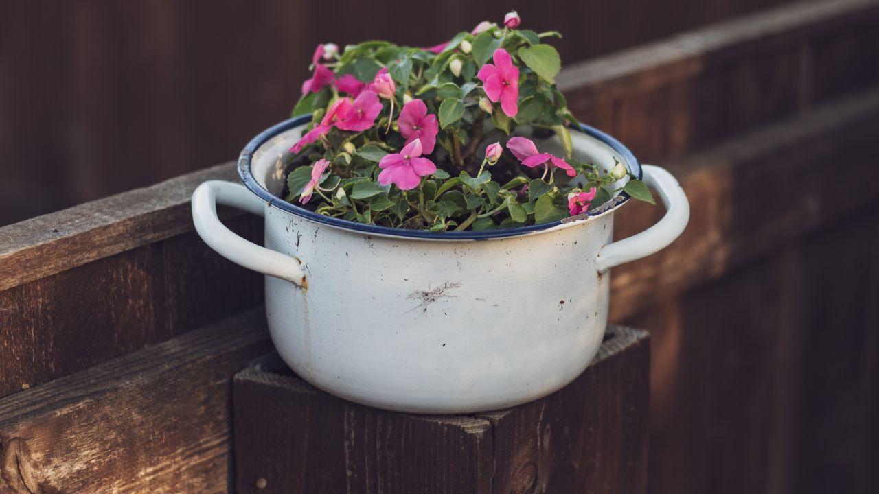Llena tu cocina de flores
