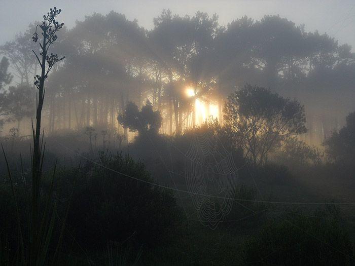 Los primeros rayos de sol descubrían telarañas perfectas como esta.
