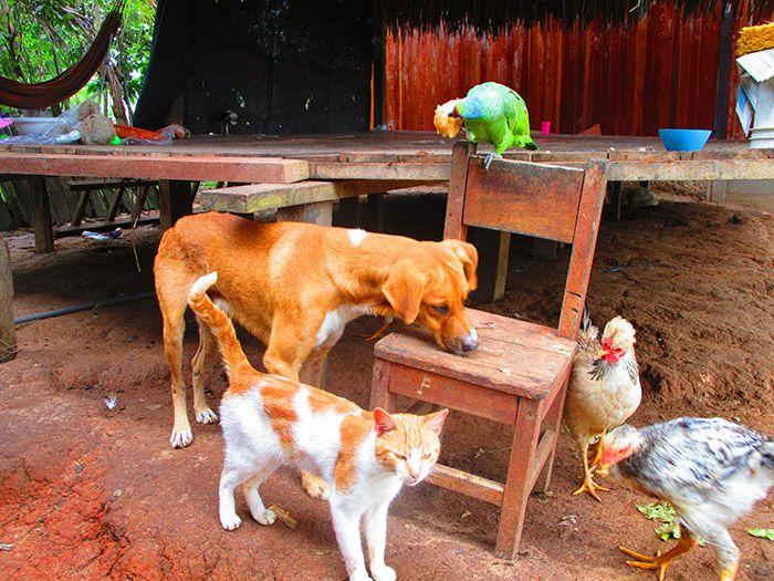En la casa, además de con las chicas ¡convivimos con todo tipo de animales! jejeje