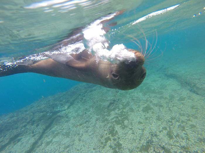 Galápagos: no es lugar para mochileros