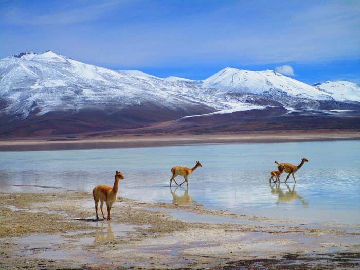 Reserva Nacional de Fauna Andina Eduardo Avaroa, Bolivia
