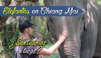 Excursión Elefantes en Chiang Mai. ¿Es ético? Mejores santuarios Tailandia