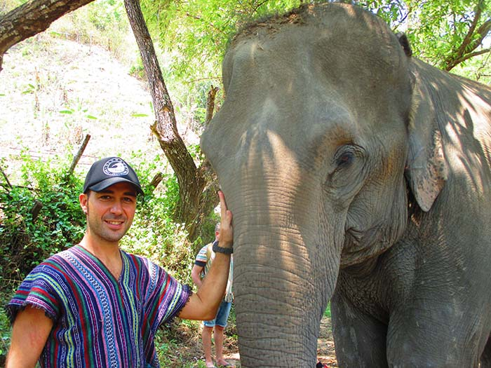 Ver elefantes en Chiang Mai