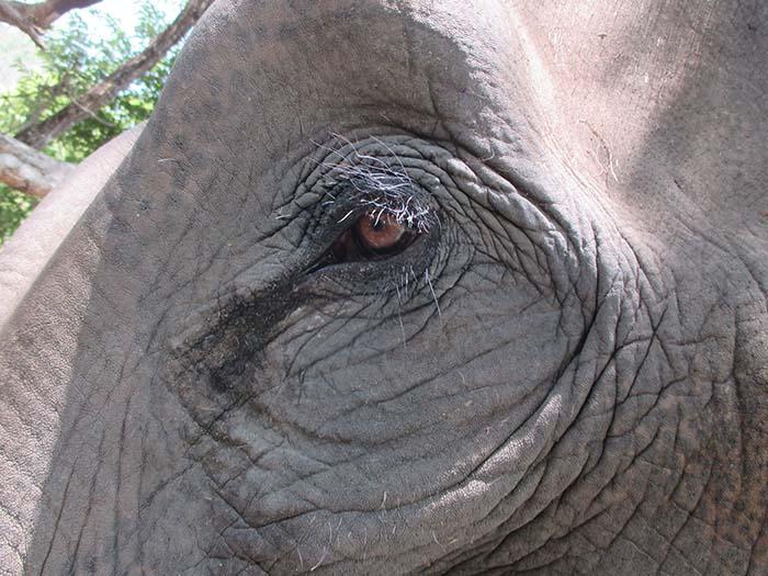 Santuarios de elefantes recomendados en Chiang Mai