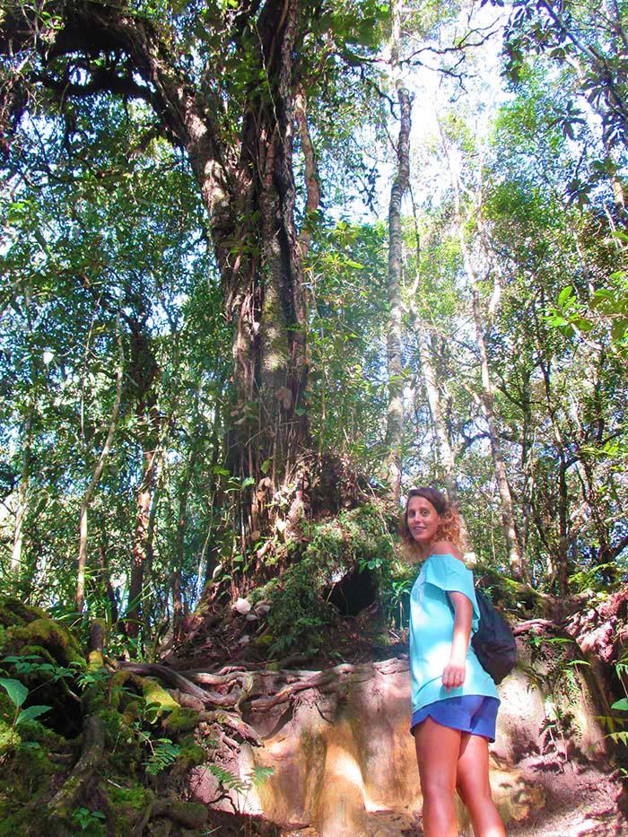 Qué hacer en Cameron Highlands de Malasia