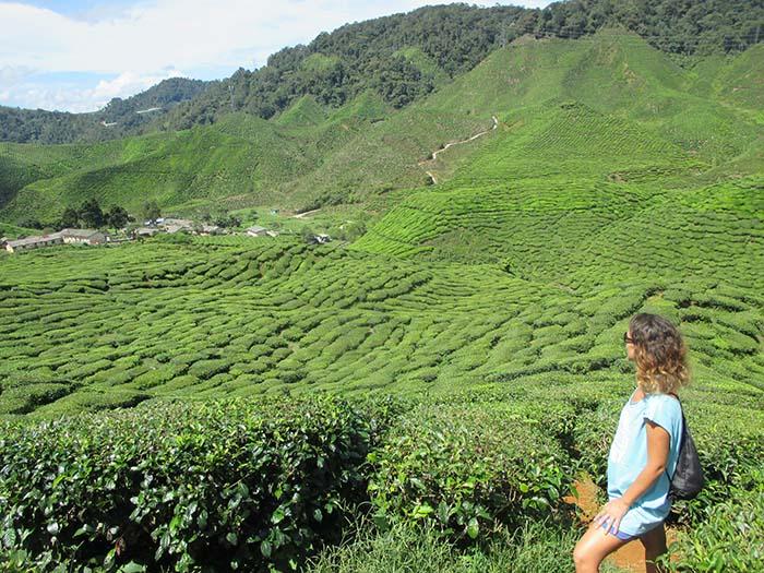 Visitar las plantaciones de té en Cameron Highlands