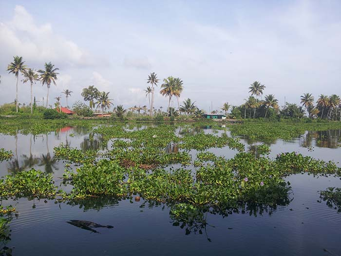 Backwaters de Kerala en India