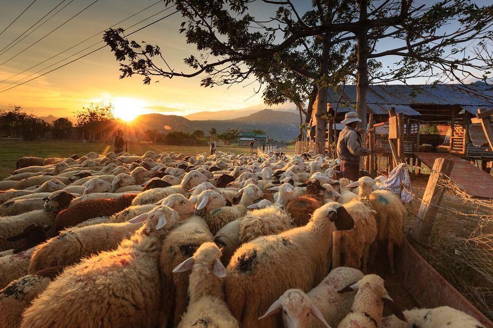 Trabajar por el mundo en granjas organicas permacultura woofing