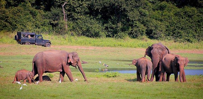¿Qué hacer en Kandy? - Safaris para ver animales en libertad