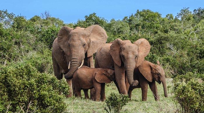 Safaris para ver animales en libertad con salida desde Sigiriya y/o Dambulla